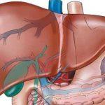 أسباب وأعراض تضرر الكبد وطرق علاجه
