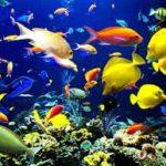 مرض تعفن الزعانف في اسماك الزينة