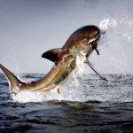أكبر وأشرس أسماك تم صيدها