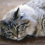 علامات احتضار القطط و كيفية التعامل معها