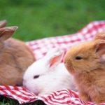الحمل عند أنثى الأرنب و كيفية الاعتناء بصغارها