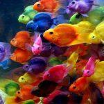 معلومات عن التكاثر في الاسماك