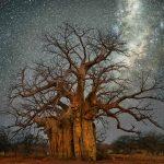 الأشجار على كوكب الأرض أكثر من نجوم المجرة