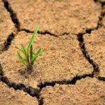 أبرز التحديات البيئية التي تواجهها دولة الإمارات