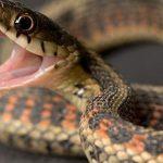 تربية الثعابين وحكم الدين من اقتناءها بالمنزل