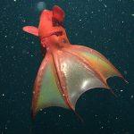 حقائق عن كائنات أعماق البحر الغامضة
