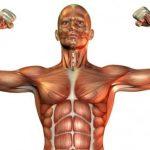 ابحاث واكتشافات علمية حديثة عن العضلات