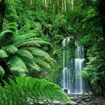 غابات كثيفة يغمرها المطر طول العام