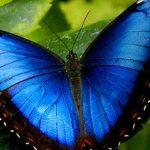 دورة حياة الفراشة من البيضة و حتى الحشرة الكاملة