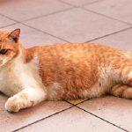 علامات الحمل في القطط