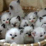طرق رعاية القطط بعد الولادة