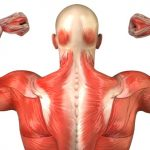 تأثير الكالسيوم الزائد على صحة العضلات