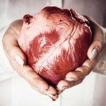 تأثير الكالسيوم على صحة القلب