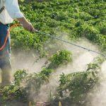 أنواع المبيدات الحشرية وأسباب انتشارها