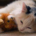 كيفية التعامل مع القطط المصابة بالانفلونزا