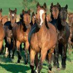 كيفية تربية الخيول و العناية بها