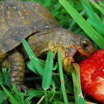 كيفية تربية السلاحف في المنزل
