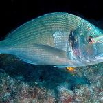 كيفية العناية بأسماك الدنيس و تغذيتها