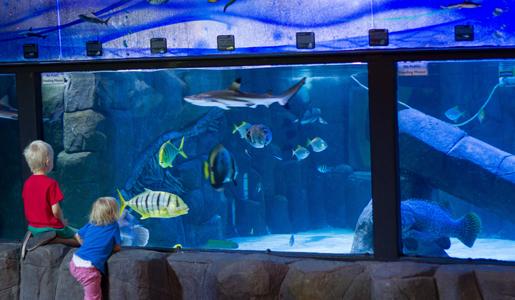 السمك في بويزي - السياحة في مدينة بويزي الأمريكية