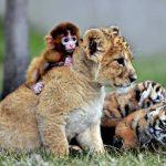 اشهر الغرائب في عالم الحيوانات
