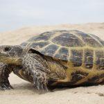 أغرب أنواع السلاحف الموجودة في العالم