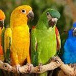 أكثر الأمراض شيوعاً في طيور الزينة