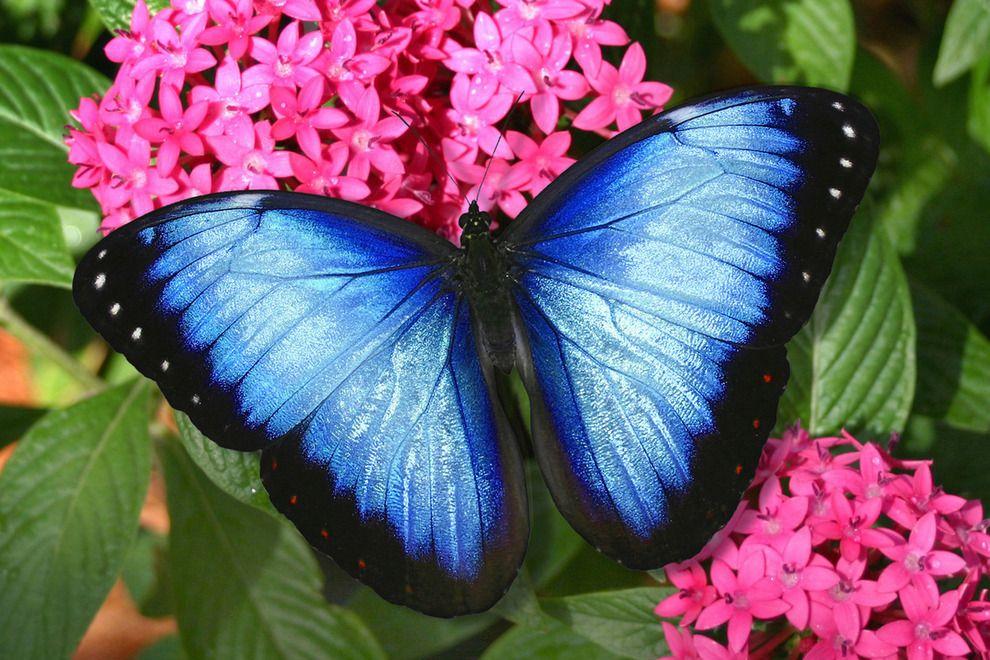 الفراشات - مدينة بوكا راتون الأمريكية