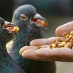 أخطر أطعمة تهدد حياة الطيور