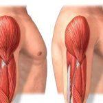 أسباب فقدان الكتلة العضلية بشكل مفاجئ