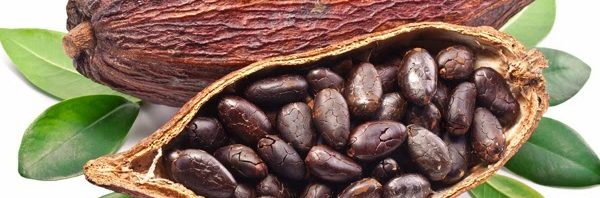 ccea0268058e3 فوائد الكاكاو للحامل والجنين