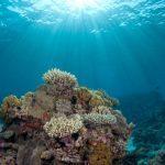 بحث عن خصائص قاع المحيط والأحياء الموجودة به