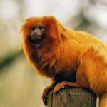 أشهر الحيوانات التي تم انقاذها من الانقراض