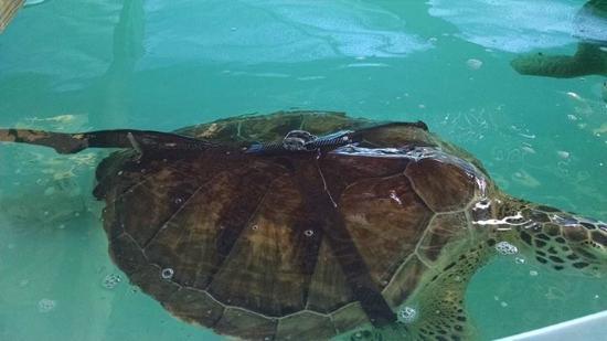 السلاحف - أجمل الأماكن السياحية في جزيرة ساوث بادري