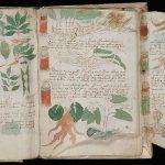 حقائق حول لغز مخطوطة فوينتش