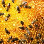 معلومات عن مستعمرات النحل