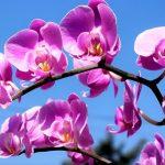 كيفية زراعة زهرة الأوركيد و الاعتناء بها