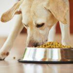 أكثر الأطعمة خطورة على الكلاب