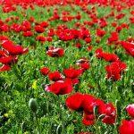 أغرب الحقائق و الاكتشافات عن الزهور