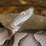 أبرز الفروقات بين الأفاعي و الثعابين