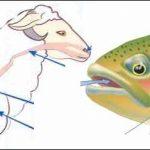 طرق التنفس عند الحيوانات