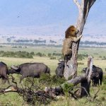 دراسة توضح قدرة الحيوانات على التنبؤ بحدوث الزلازل