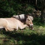 معلومات عن نوم الخيول