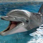 محاولات لتعليم الحيتان والدلافين الكلام