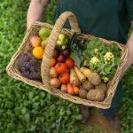 فوائد وأضرار الطعام العضوي