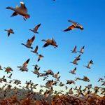 معلومات عن التشريح الخارجي والداخلي للطيور