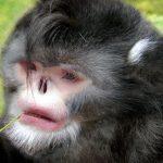 اكتشاف أنواع جديدة من الحيوانات في الهيمالايا