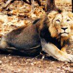 الحيوانات التي انقرضت في الجزيرة العربية بعد حفر قناة السويس