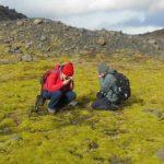 دراسة جديدة تؤكد أن النباتات استوطنت الأرض منذ 500 مليون سنة