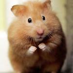 معلومات عن الحيوانات المعدلة وراثيا من قبل العلماء