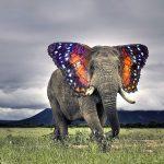 أغرب أنواع الحيوانات المهجنة حول العالم